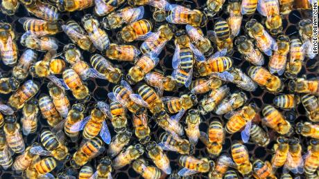 This startup is saving crops by making 'super bees'